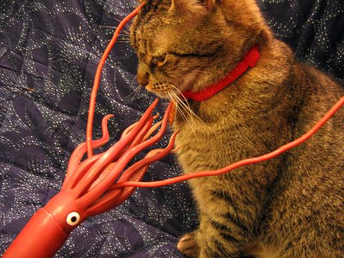 bfvsgf cats meet giant