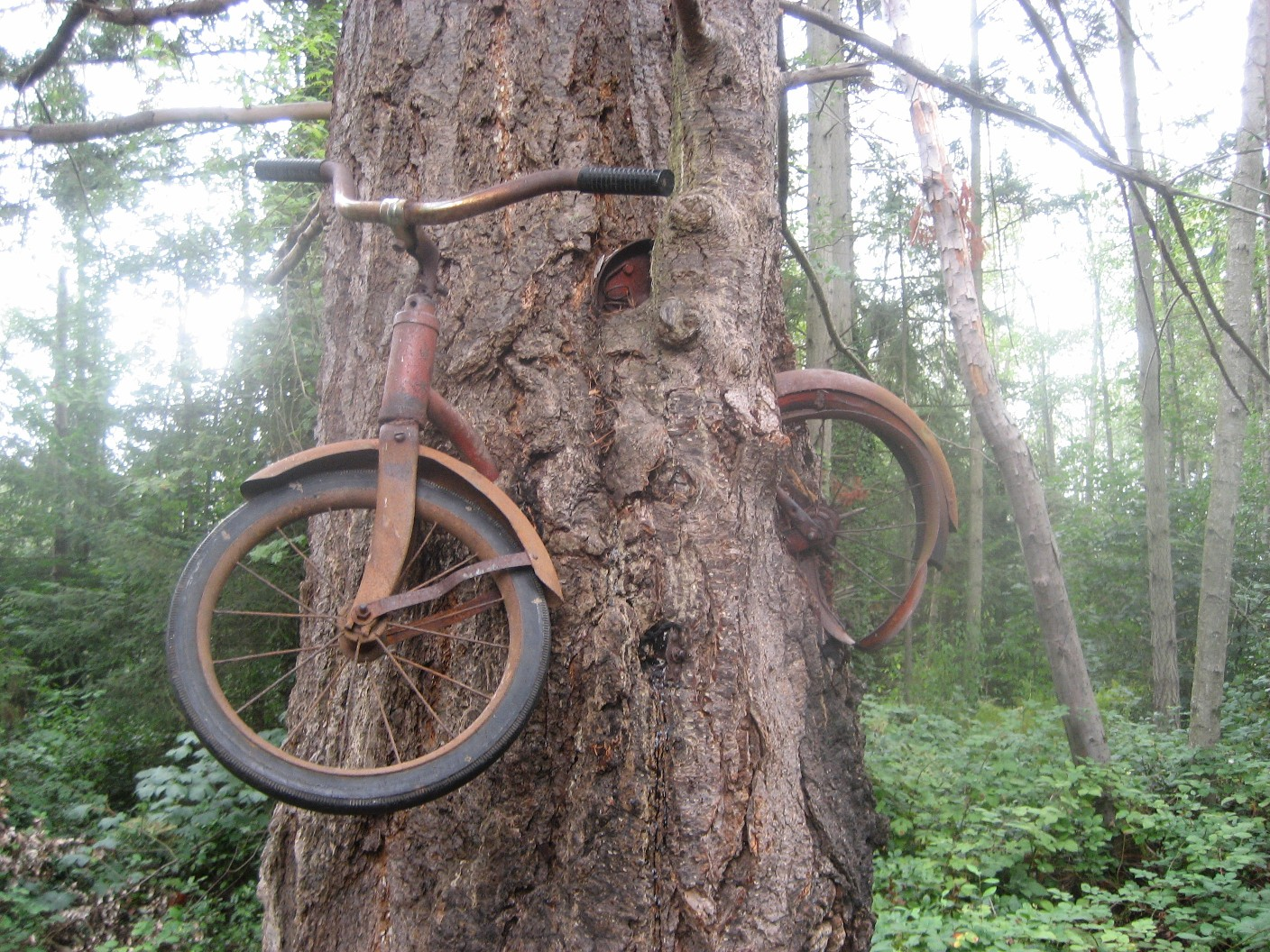 Bike Island Vashon Island Bike Tree